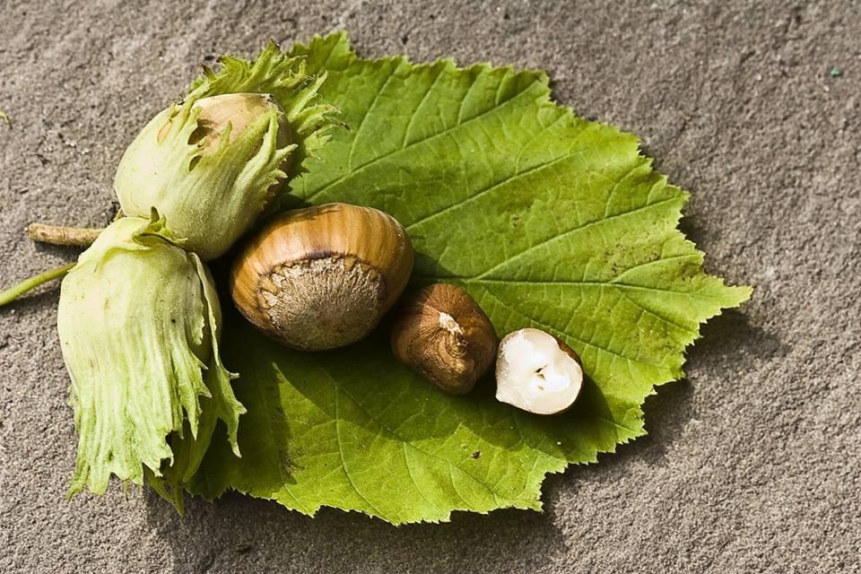 Nocciola di Avella, assaggi, usi e abbinamenti in cucina.